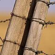 Gate Posts Join A Barbed Wire Fence Print by Gordon Wiltsie