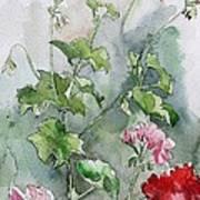 Geraniums Print by Stephanie Aarons