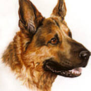 German Sheppard Print by Patricia Ivy