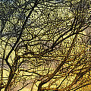 Ghosts Of Crape Myrtles Print by Judi Bagwell