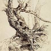 Gnarled Tree Trunk Print by Thomas Cole