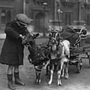 Goat Cart Print by Fox Photos
