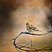 Goldfinch In Deep Thought Print by J Larry Walker