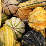 Gourds Print by Kimberly Perry