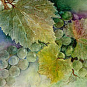 Grapes II Print by Judy Dodds