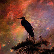 Great Blue Heron Viewing The Cosmos Print by J Larry Walker