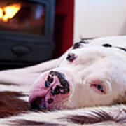 Great Dane Dog Sleeping By Fire Print by Sharon Vos-Arnold