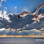 Greek Gulls With Sunbeams Print by Meirion Matthias