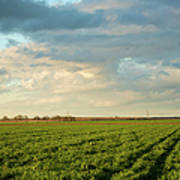 Green Field With Clouds Print by Topher Simon photography