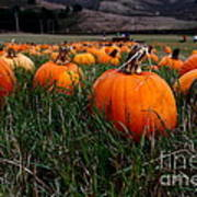 Halloween Pumpkin Patch 7d8405 Print by Wingsdomain Art and Photography