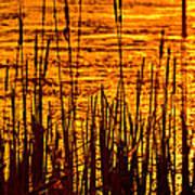 Horicon Cattail Marsh Wisconsin Print by Steve Gadomski