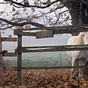 Horse At Fence Print by Jim Corwin and Photo Researchers