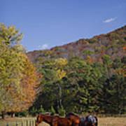Horses And Autumn Landscape Print by Kathy Clark