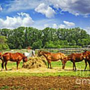 Horses At The Ranch Print by Elena Elisseeva