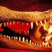 Human Skull  Alligator Skull Print by Garry Gay
