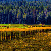 Idaho Hay Bales  Print by David Patterson