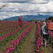 In The Tulip Fields Print by Mike Reid