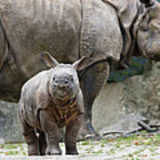 Indian Rhinoceros Rhinoceros Unicornis Print by Konrad Wothe