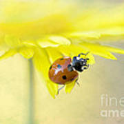 Lady In Yellow Print by Jacky Parker