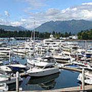 Large Marina In Vancouver Bc Canada. Print by Gino Rigucci