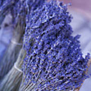 Lavender Bunches In Provence Print by Paul Grand