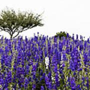 Lavender Field Print by Lisa  Spencer