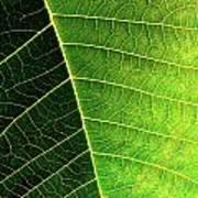 Leaf Texture Print by Carlos Caetano