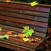 Leafs In Bench Print by Carlos Caetano