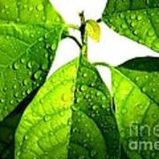 Leaves With Raindrops Print by Theresa Willingham