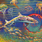 Leopard Shark And Jellyfish Print by Nancy Tilles