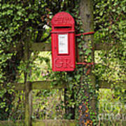 Letterbox In A Hedge Print by Louise Heusinkveld