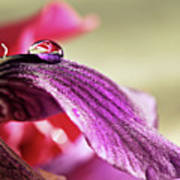 Lily's Drop Print by Gulale