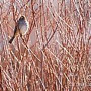 Little Sparrow Print by Sabrina L Ryan
