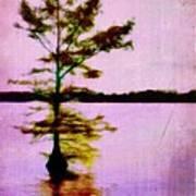 Lone Cypress Print by Judi Bagwell