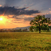 Lonely Tree In Field Print by Malcolm MacGregor