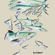 Mackerel Montage Print by Kevin Brant