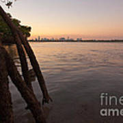 Miami And Mangroves Print by Matt Tilghman