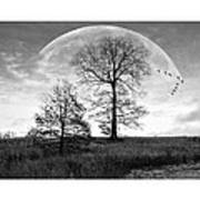 Moonlit Silhouette Print by Brian Wallace