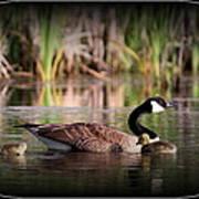 Mother Goose Print by Travis Truelove