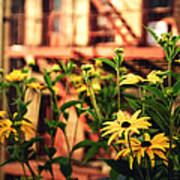 New York City Flowers Along The High Line Park Print by Vivienne Gucwa
