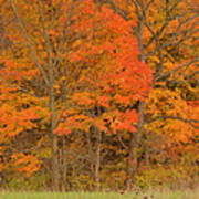 Northeast Fall Colors Print by Stephen  Vecchiotti