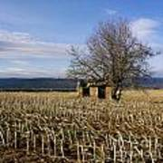 Old Hut Isolated In A Field. Auvergne. France Print by Bernard Jaubert