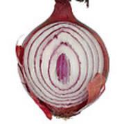Onion Print by Frank Tschakert