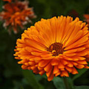 Orange Flower At The Manor Print by Noah Katz