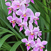 Orchids 15 Print by Becky Lodes