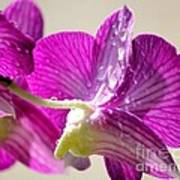 Orchids And Raindrops Print by Theresa Willingham