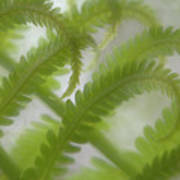 Ostrich Fern Frond Pattern Of Curves Print by Kathleen Clemons