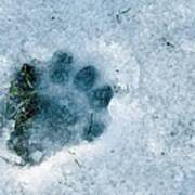Otter Footprint In Snow Print by Duncan Shaw