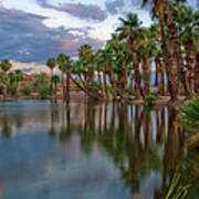 Palms Trees Over Papago Lake Print by Dave Dilli