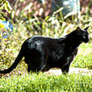 Panther In The Backyard Print by Cheryl Poland